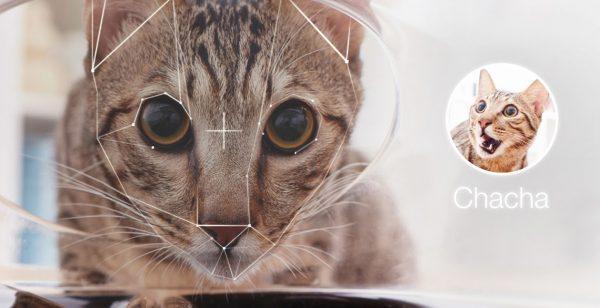Кот в камере