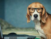 собака и скайп